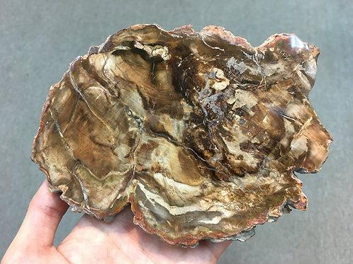 木化石 Petrified Wood ( M2 )