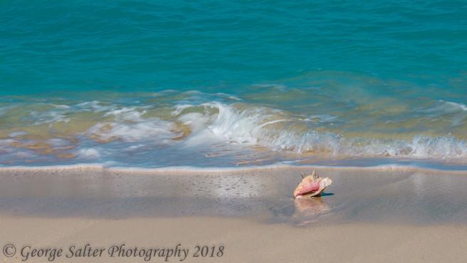 Conch on beach