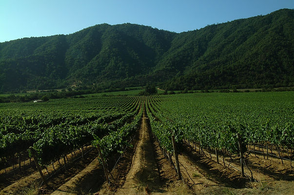 615_EMILIANA_Organic vineyard3.jpg