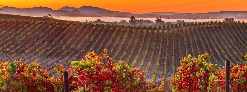 Sunset-over-California-Winery_edited_edi