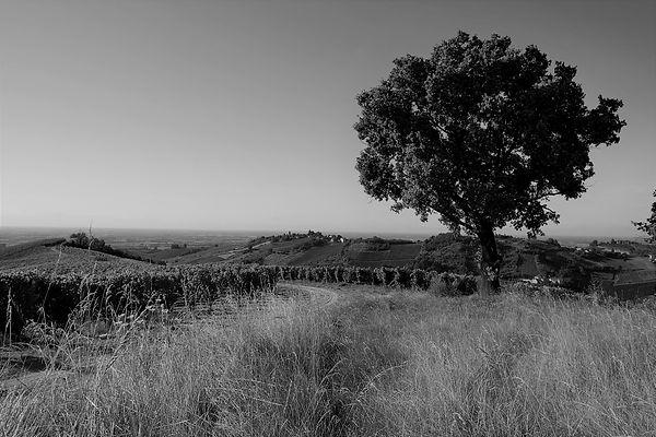 1003_Castel_del_Lupo_vineyard_4.jpg