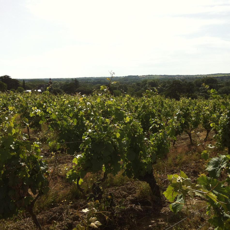 Domaine Pontbriand