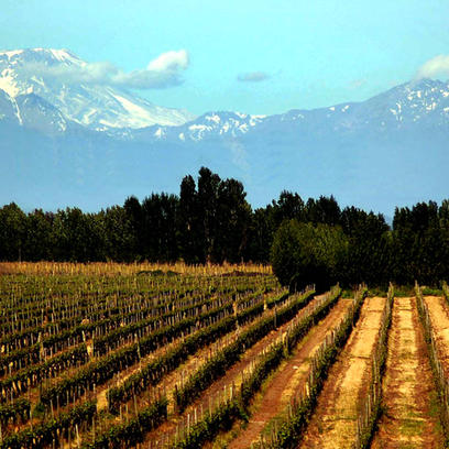 Chilean Wines Company