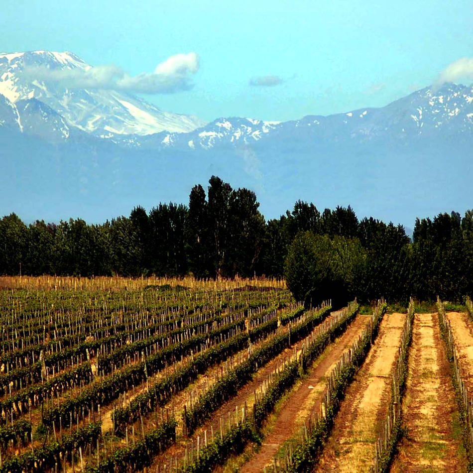 Chilean Wines Company