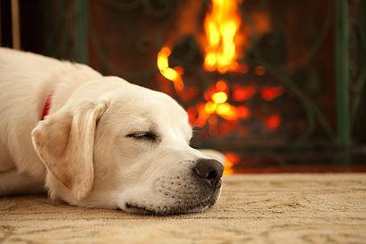 dog by fire.jpg