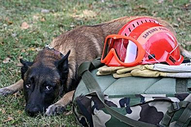 cani-coach 29 éducateur canin à domicile