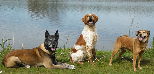 éducateur canin, cani-coach 29