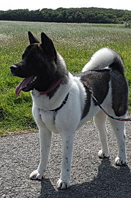 cani-coach 29 éducation canine