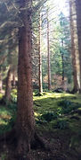 Lael Forest Garden - 5 minutes from Braemore Walled Garden B&B