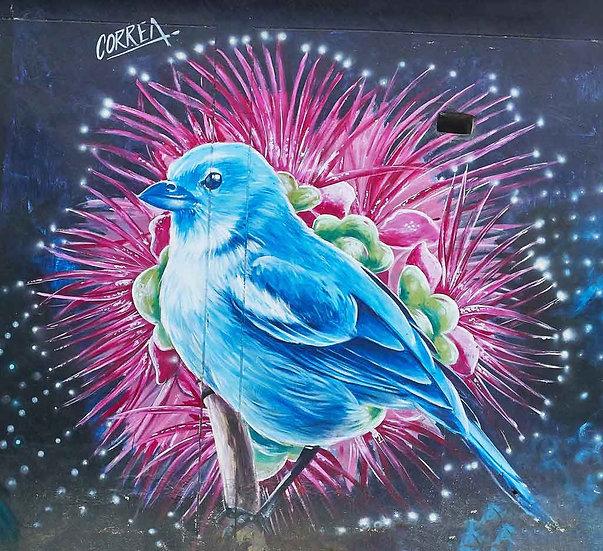 Bird - Artist: Miguel Corea