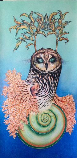 Coral Owl