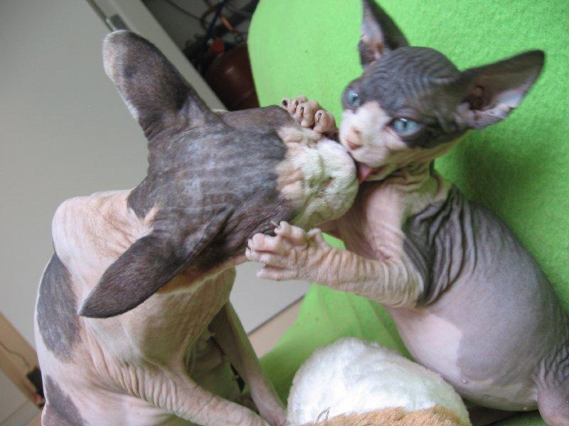 Maya en kitten