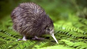 Der Kiwi, Kiwi oder die Kiwi?