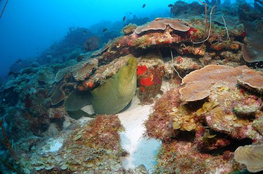 Mar-vermelho4.png