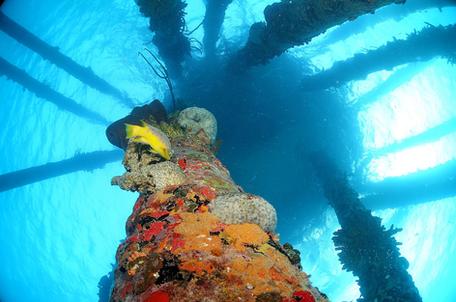 Bonaire Mergulho