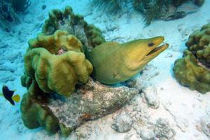 Mergulho Bonaire