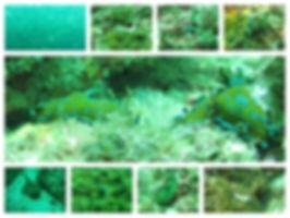 mergulho Cabo frio2.jpg