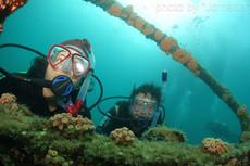 jornadasub_ilha grande _NAUI _SCUBA DIVE