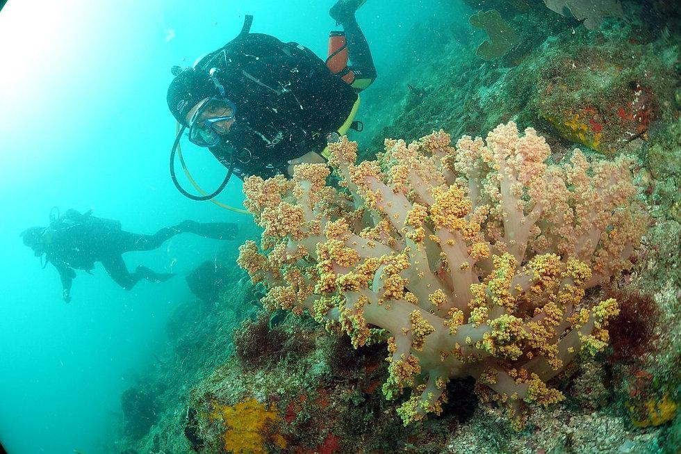 DSC09346_jornadasub_naui_soft coral.jpg