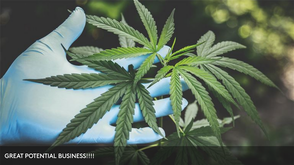 Approved Land for Cannabis Provisionary Center - Manistee, Michigan