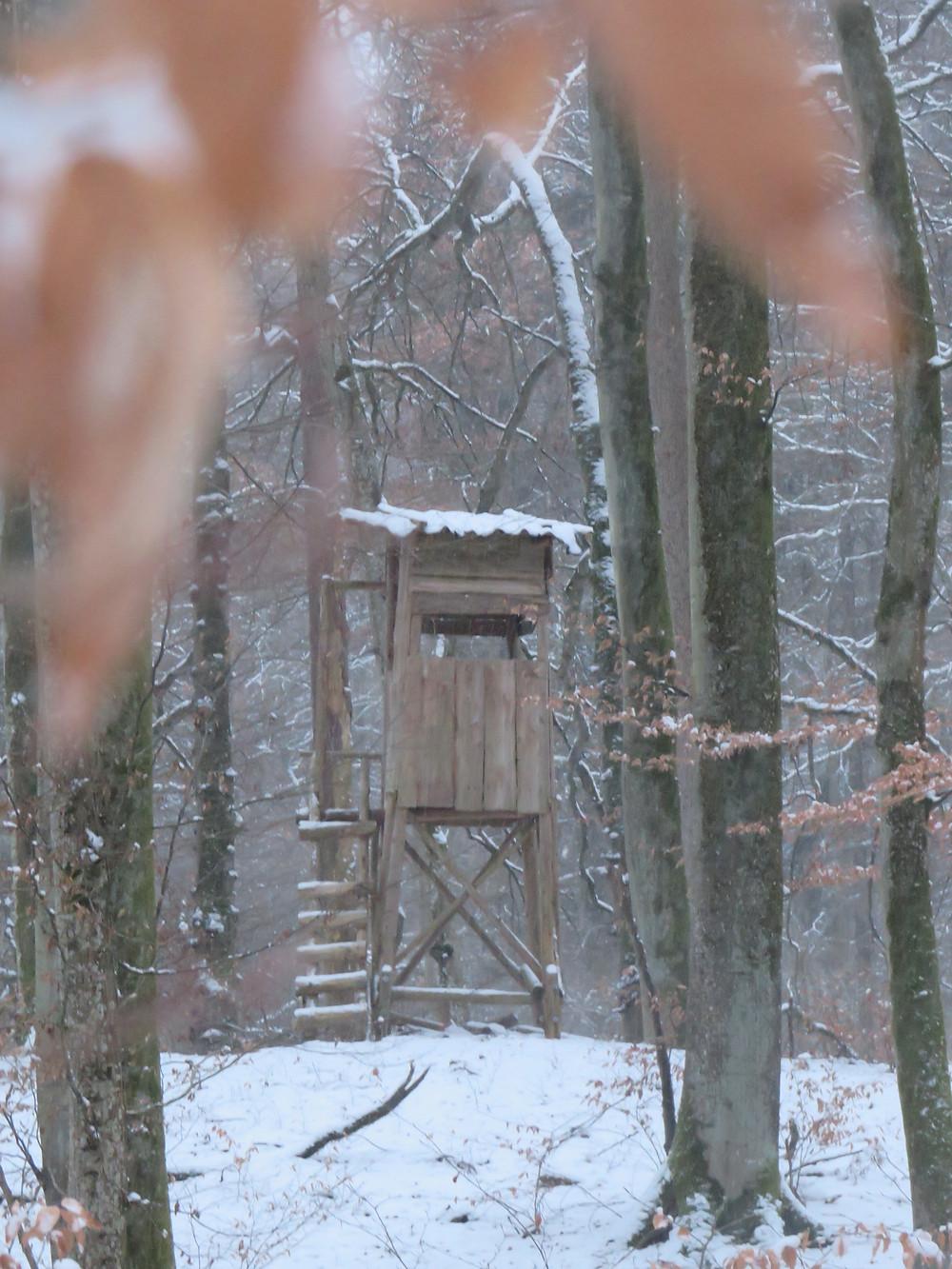 Hochsitz von Jägern im Wald bei Allensbach/Konstanz