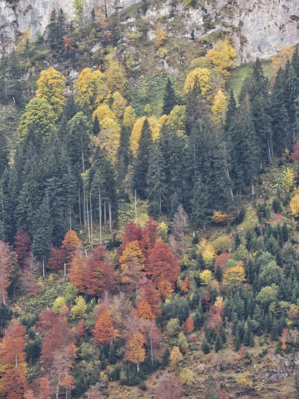 Verfärbte Bäume im Herbst