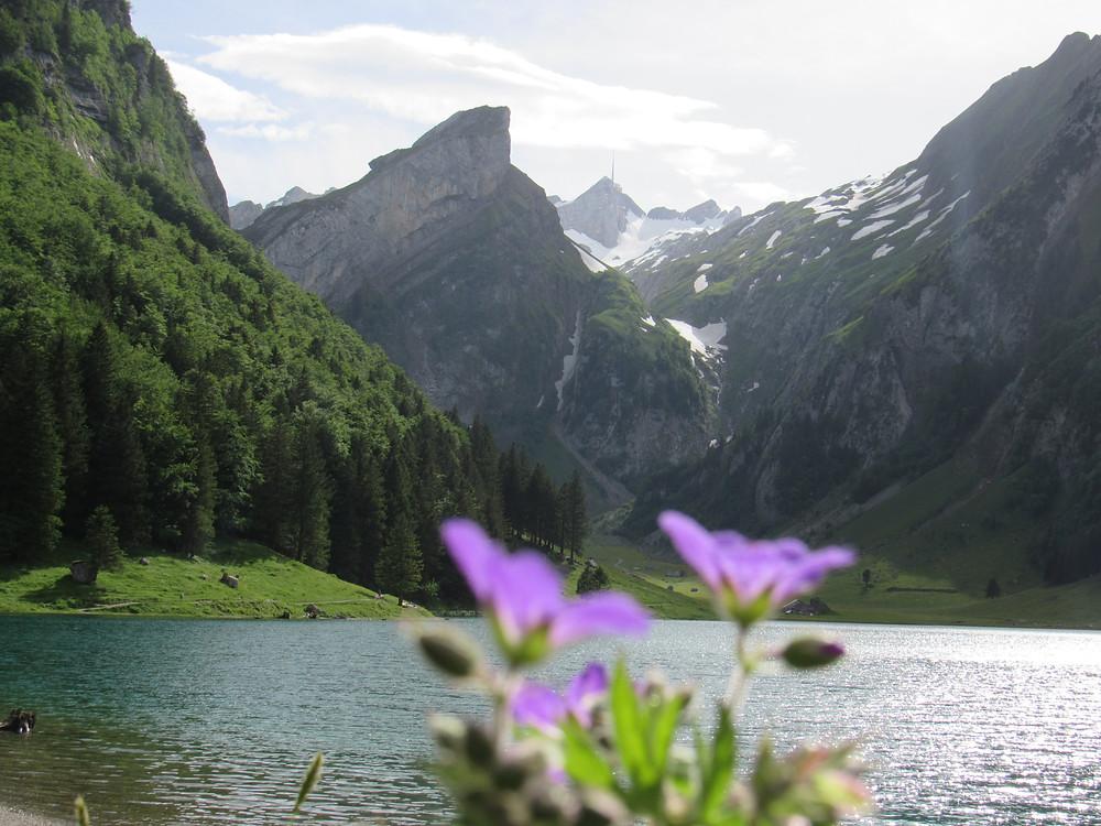 Seealpsee mit Blumen im Vordergrund