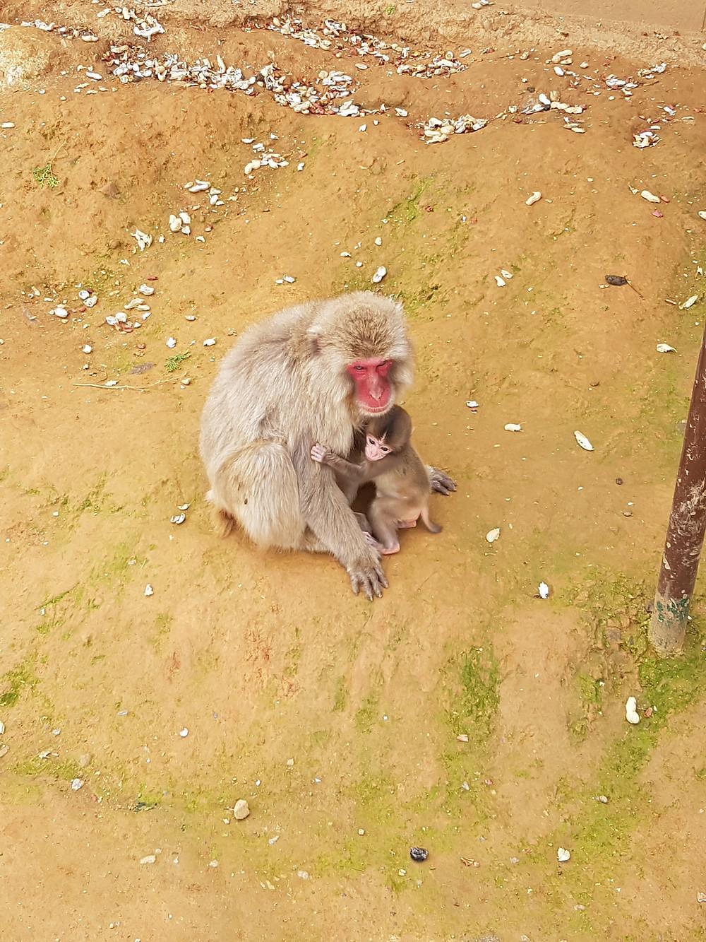 Affenmutter und ihr Junges
