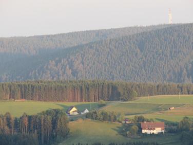 Aussicht über die Hügel im Schwarzwald