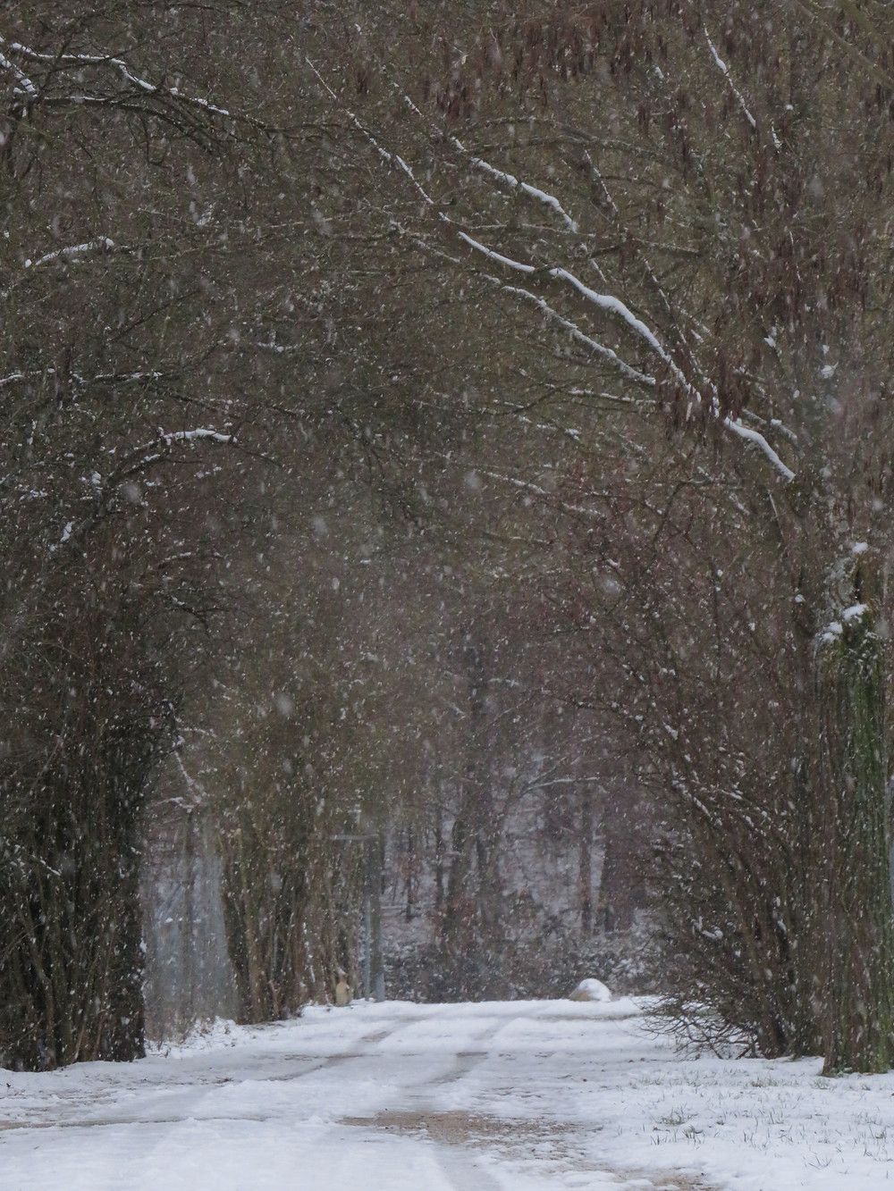 Weg im Wald bei Allensbach
