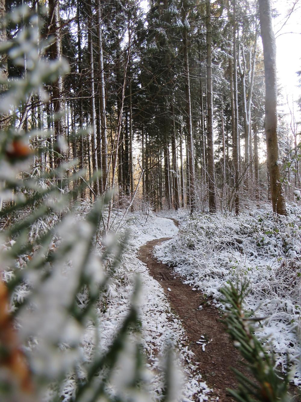Ein kleiner Pfad im Wald