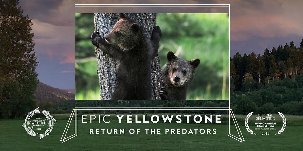 Epic Yellowstone Screening: Return of the Predators