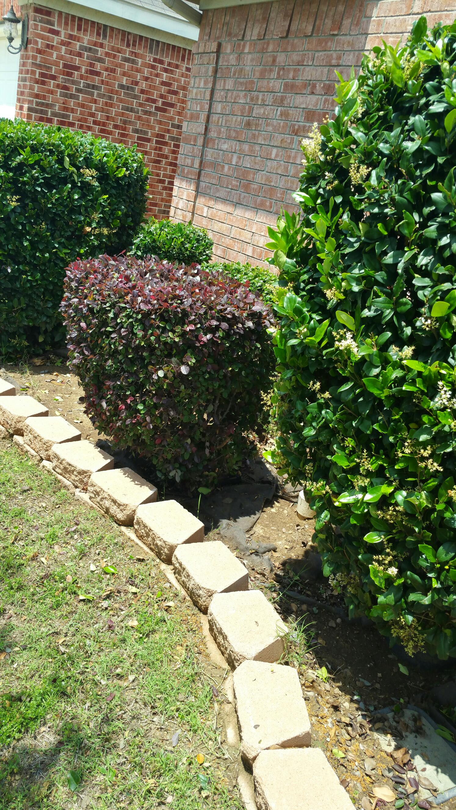 clean out shrubbery beds