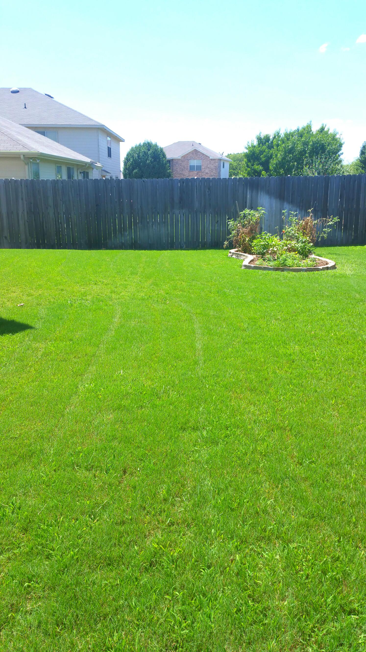 Lawn cut at the right level