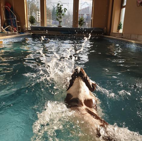 River Swimming.jpg