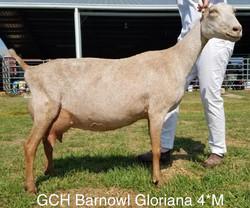 gloriana1