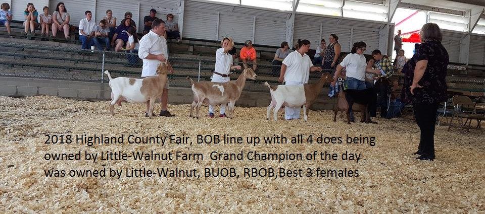 BOB line up hillsboro2 2018.jpg
