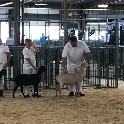 2019 Ohio State Fair Junior Lamancha Show