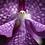 Thumbnail: Zen Puzzle - Teaser