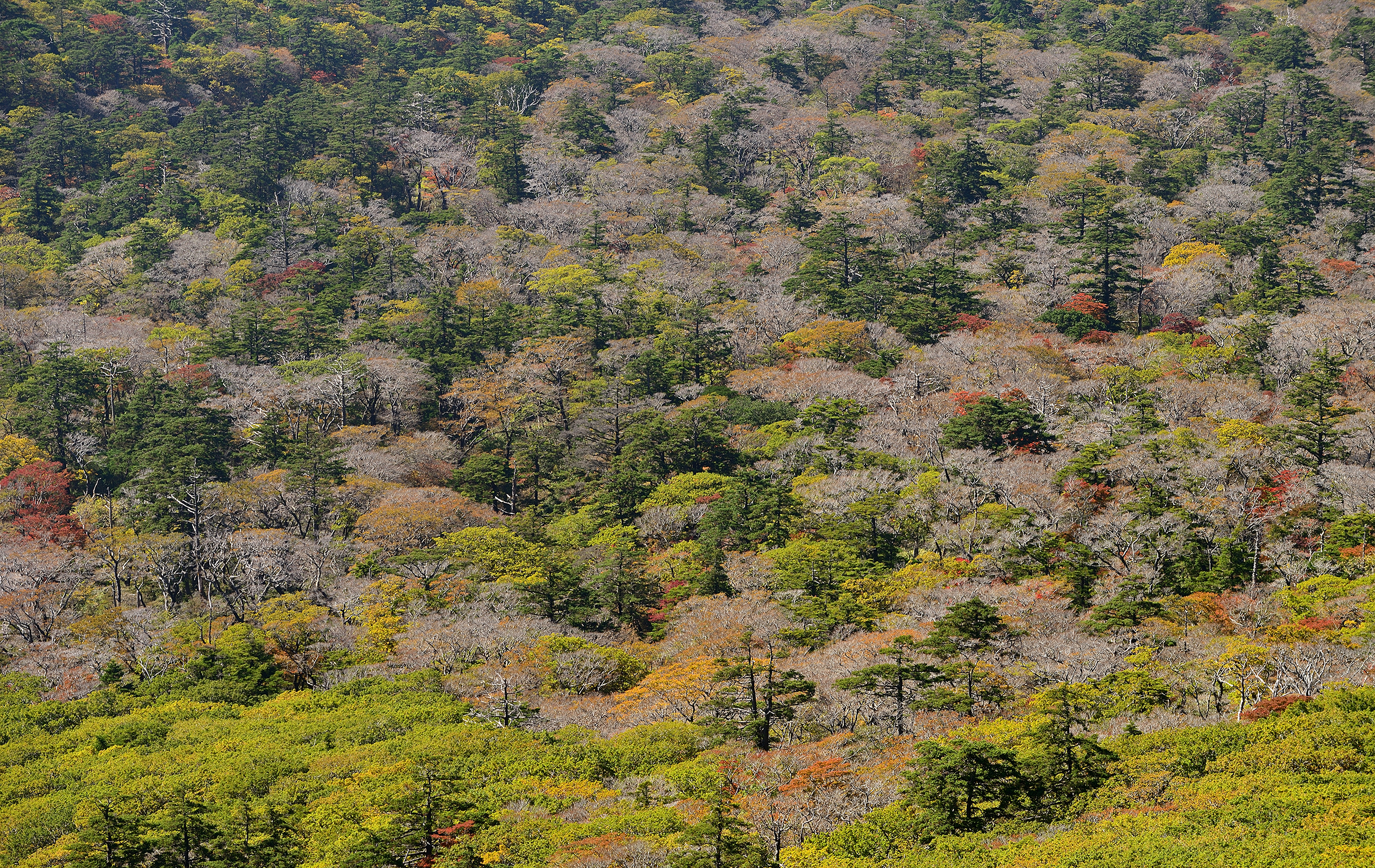 Kirishima, Japan