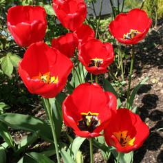 Apeldoorn in spring