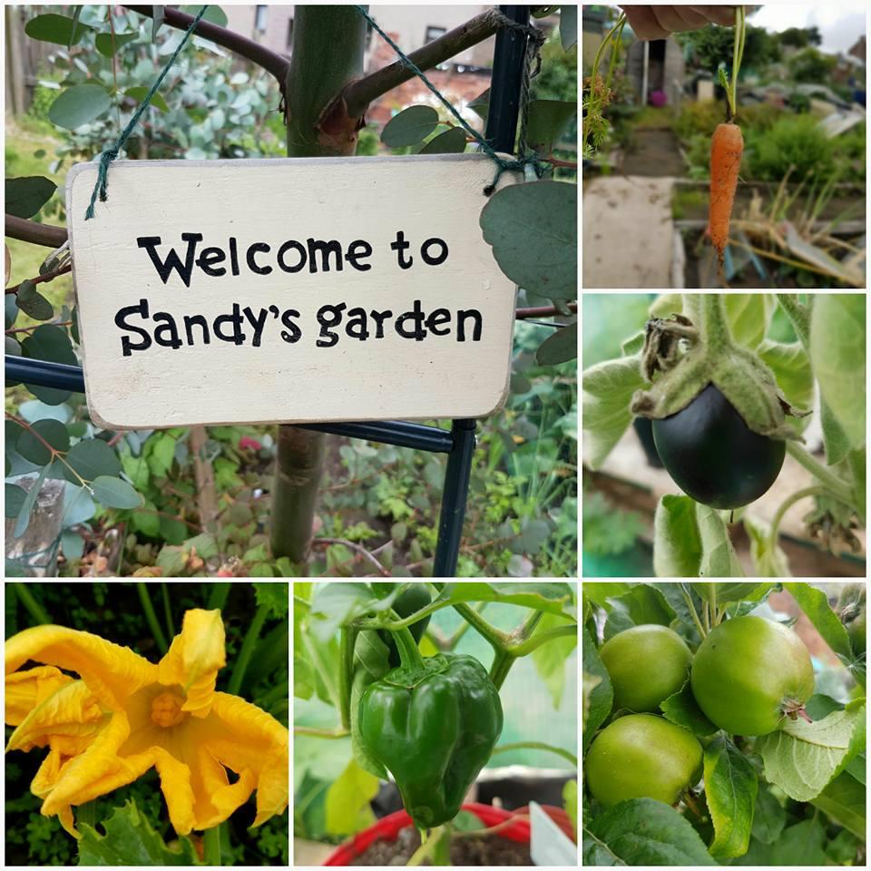 Sandy's garden.jpg