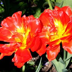 Monte Orange