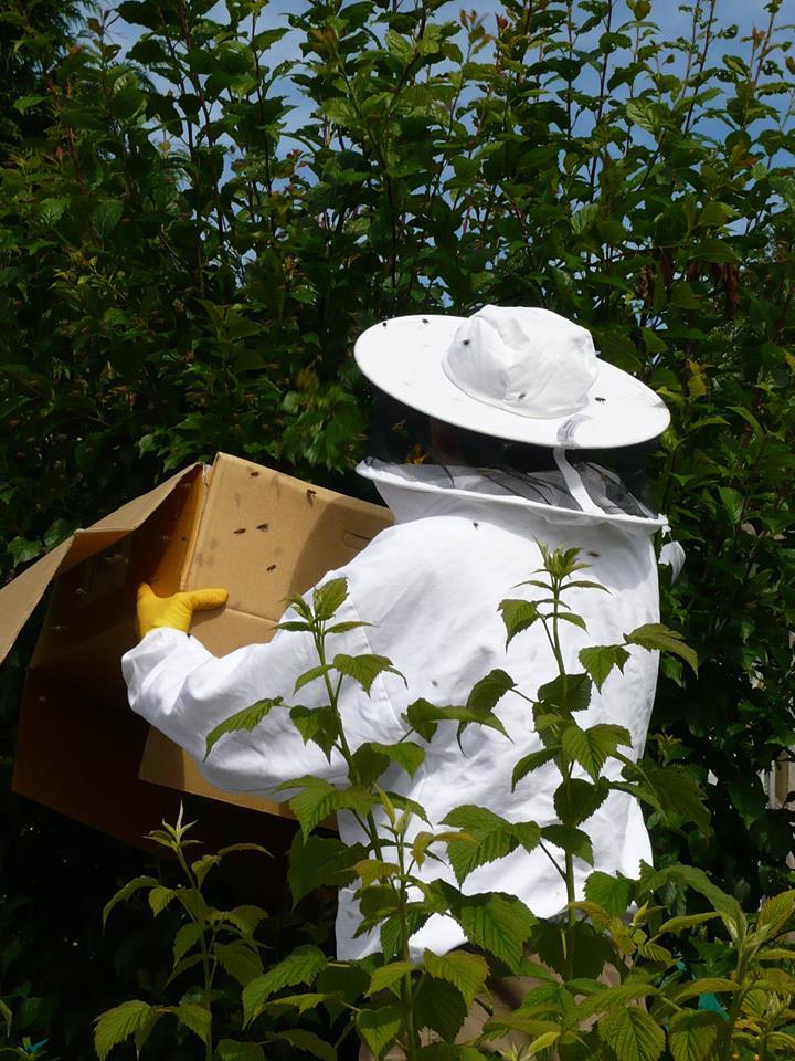 Bye bye bees.jpg