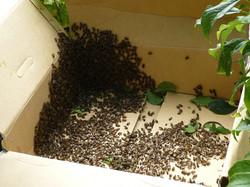 bee invasion.jpg