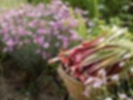 Jardin_du_Lézard_Vesdun_-_crédit_morvan_