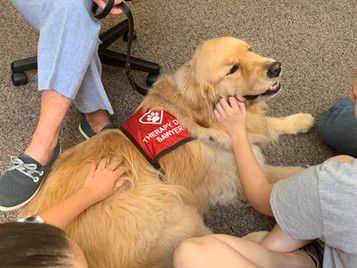 Therapy dogs in the house!