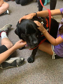 Wellness Wednesday with therapy dogs!