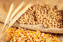 soybean, wheat and corn seeds in Brazil.