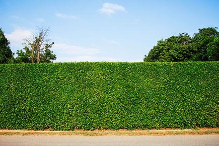 ornamental-fence-at-sky-2BRJN68.jpg